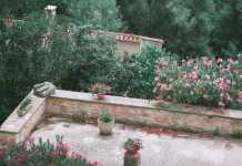 Jaką trawę wybrać - sprawdzone mieszanki traw do zasiania w ogrodzie